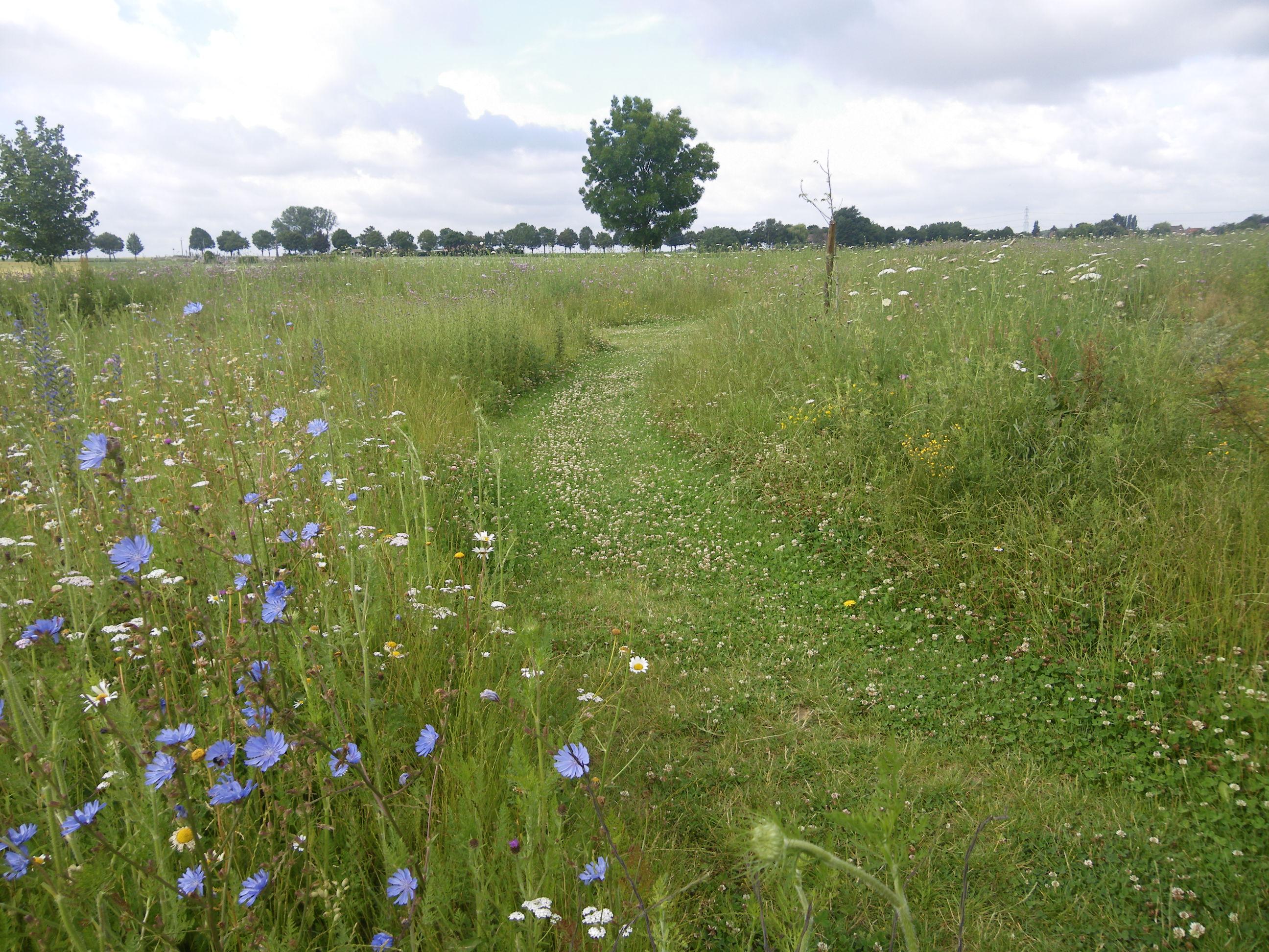 Gestion differenci e opus environnement for Gestion des espaces verts